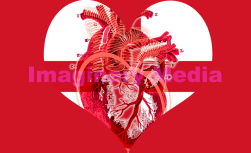 'Heart Red' by Imaginary Media Images